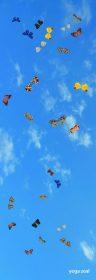 butterflies_SKY_wo_3_big_ones_360x